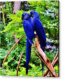 Two Birds Of A Feather Acrylic Print