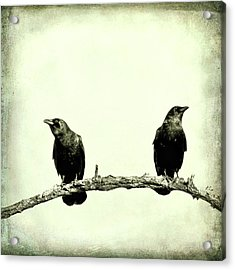 Two Birds One Branch Texture Square Acrylic Print by Terry DeLuco