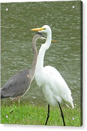 Acrylic Print featuring the photograph Two Birds Passing By The Pond by Jeanne Kay Juhos