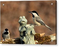 Two Black-capped Chickadees And Frog Acrylic Print