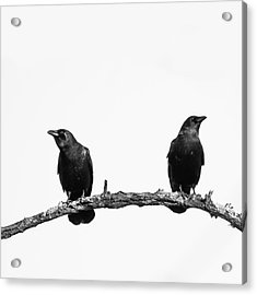 Two Black Crows One Branch White Square Acrylic Print by Terry DeLuco
