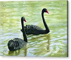 Two Black Swans Acrylic Print by Sharon Freeman