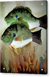Two Bluegills Acrylic Print