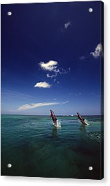 Two Bottlenose Dolphins Dancing Across Acrylic Print by Natural Selection Craig Tuttle