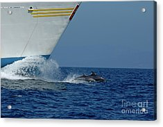 Two Bottlenose Dolphins Swimming In Front Of A Ship Acrylic Print by Sami Sarkis