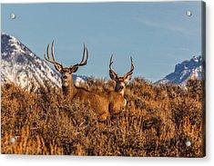 Two Bucks Glory Acrylic Print