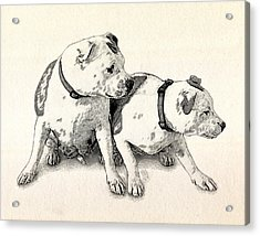 Two Bull Terriers Acrylic Print