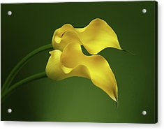 Two Calla Lily Flowers On Green Background Acrylic Print