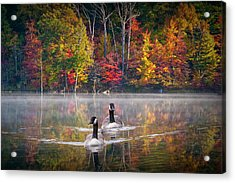 Two Canadian Geese Swimming In Autumn Acrylic Print