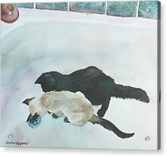 Two Cats In A Tub Acrylic Print by Anne Gifford