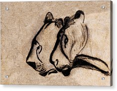 Two Chauvet Cave Lions - Clear Version Acrylic Print