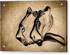 Two Chauvet Cave Lions Acrylic Print