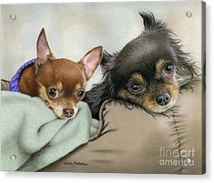Two Chi's In A Pod Acrylic Print