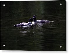 Two Common Loons At Sunset Acrylic Print