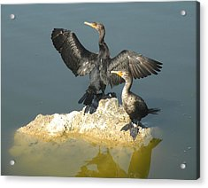 Two Cormorants Acrylic Print by Rosalie Scanlon