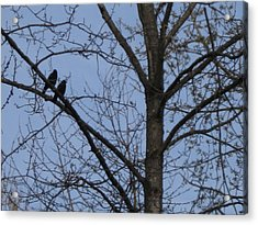 Two Crows Acrylic Print