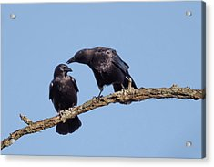Two Crows On A Branch Acrylic Print by Terry DeLuco