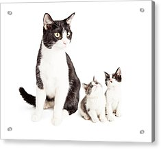 Two Cute Kittens Looking Up At Mom Cat Acrylic Print