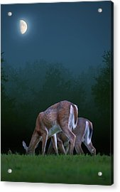 Two Deer Under The Moon Acrylic Print