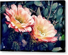Acrylic Print featuring the photograph Two Desert Blooms Apricot Glow by Julie Palencia