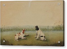 Two Dogs In A Landscape Acrylic Print by MotionAge Designs