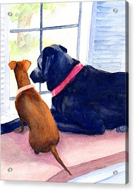 Two Dogs Looking Out A Window Acrylic Print