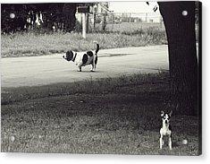 Two Dogs Acrylic Print by Toni Hopper