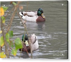 Two Ducks In The Pond Acrylic Print