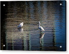 Two Egret's Fishing Acrylic Print by Garry Gay