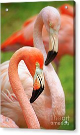 Two Flamingoes Acrylic Print by Carlos Caetano