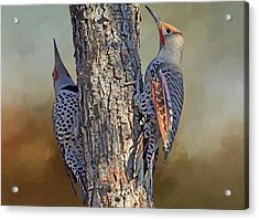 Two Flickers Acrylic Print