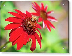 Acrylic Print featuring the photograph Two Flowers For Every Bee by Brian Hale