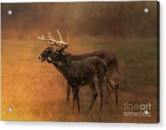 Two For One Acrylic Print by Geraldine DeBoer