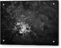 Two Frogs In A Pond Mating By Laying Acrylic Print by Roberta Murray