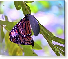 Two Hearts Beat As One Acrylic Print by Robyn King