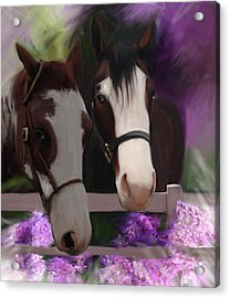 Two Horses And Purple Flowers Acrylic Print by Julianne  Ososke