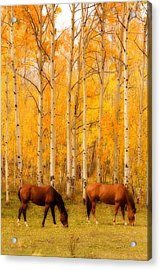 Two Horses In The Autumn Colors Acrylic Print by James BO  Insogna