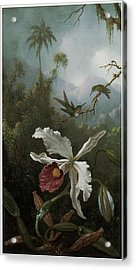Two Hummingbirds Above A White Orchid Acrylic Print by Martin Johnson Heade
