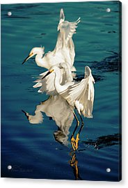 Two In Tandem Acrylic Print