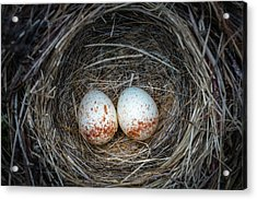 Acrylic Print featuring the photograph Two Junco Eggs In The Nest by William Lee