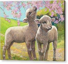 Two Lambs Eating Blossom Acrylic Print