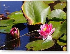 Acrylic Print featuring the photograph Two Lilies by Richard Patmore