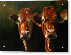 Two Limousins Acrylic Print by Cari Humphry