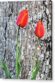 Acrylic Print featuring the photograph Two by Linda Henne