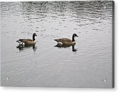 Two Lovely Canadian Geese Acrylic Print by Douglas Barnett