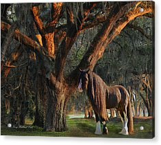 Two Majestic Souls Acrylic Print by Terry Kirkland Cook