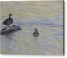 Two Mallard Ducks Acrylic Print