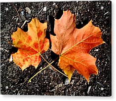 Two Maple Leaves Acrylic Print by Beth Akerman
