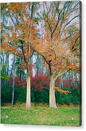 Two Oaks Acrylic Print