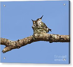 Two Of A Kind... Acrylic Print by Nina Stavlund